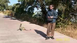Los monos se encuentran por todos lados en India.